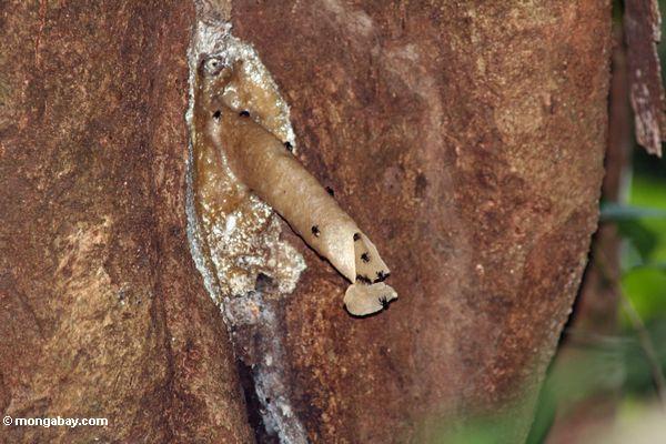 小燕子的筑巢图片|燕子筑巢简笔画|蜜蜂在家筑巢风水