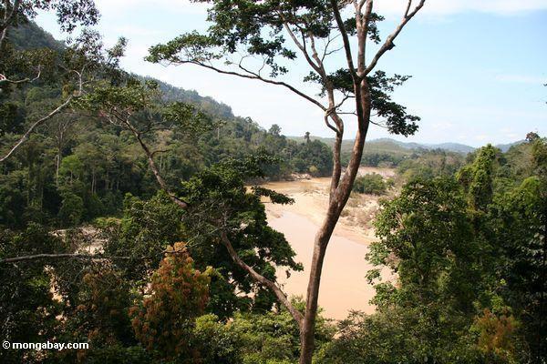 tembeling川と周辺の熱帯雨林の景色