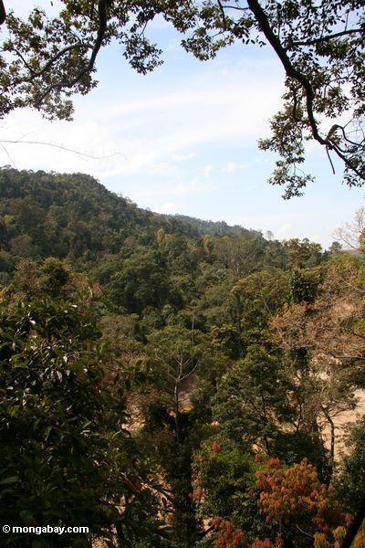 малайзийских тропических лесов
