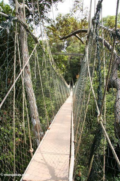 Ponte Malaysian do dossel