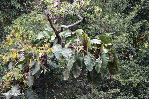 воздуха растения в дождь леса