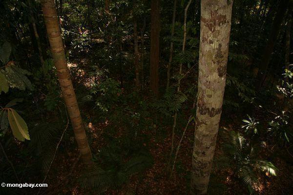 очень мало света проникает в купол, оставив лес пол темном месте в тропические леса