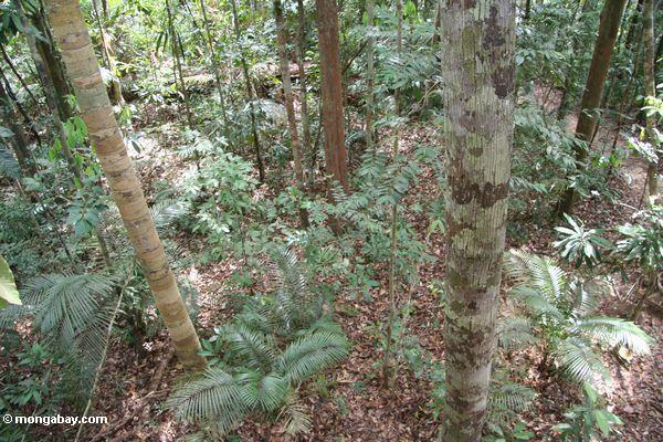 Forest floor (Taman Negara National Park in Malaysia)