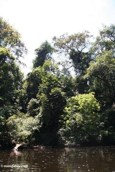Végétation le long du fleuve de Tahan