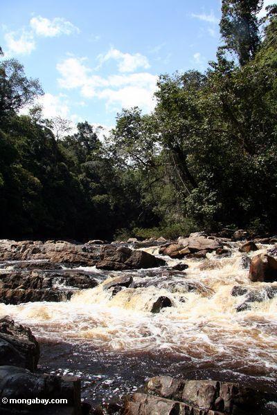 Rapids no rio de Tahan