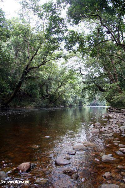 Árvores que protegem o rio de Tahan