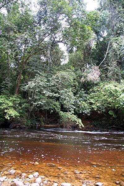 Der blackwater Tahan Fluß