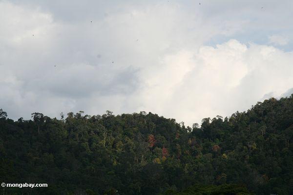 Floresta de chuva do parque nacional de Taman Negara