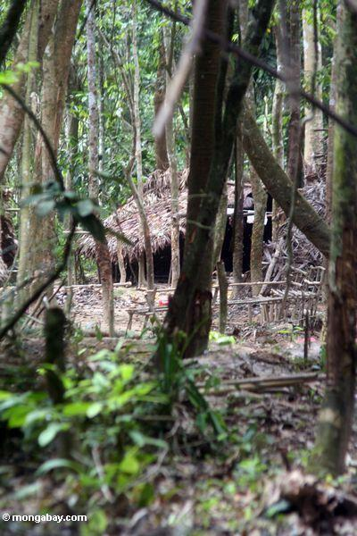 Orang asli Regelung im rainforest