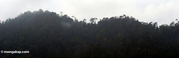 Das Steigen weg von rainforest Malaysia Taman
