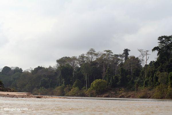 Forêt tropicale et le fleuve de Tembeling