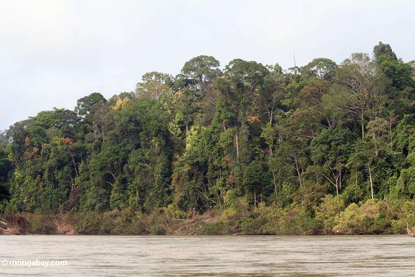 tembeling реки дождевой лес