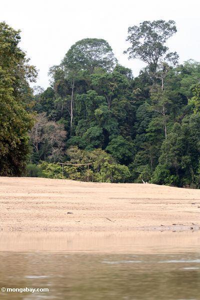футбольное поле на тропический пляж