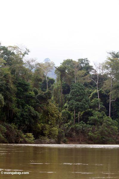 тропического леса и реки tembeling