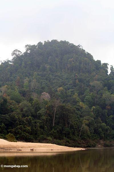 Bewaldeter Berg nahe Taman Negara