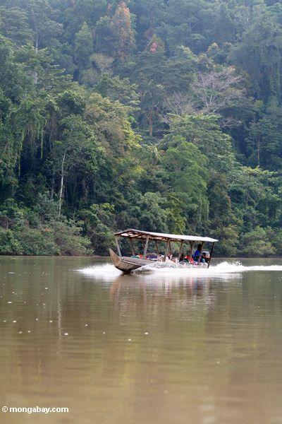 Boatload dos turistas que vão acima do rio de Tembeling