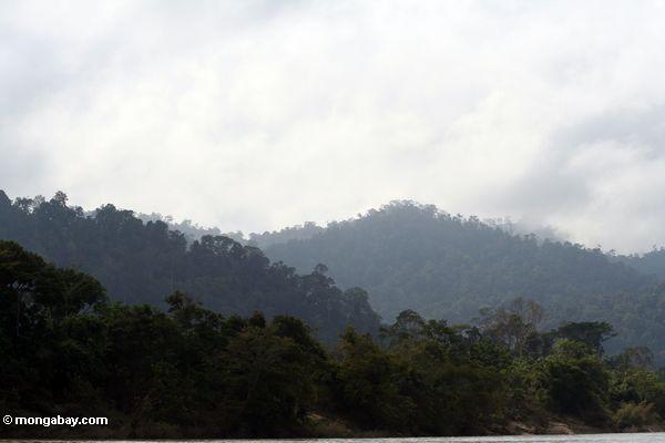 Rainforest no cume