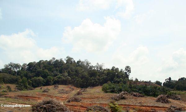 Clearing da floresta em Malaysia
