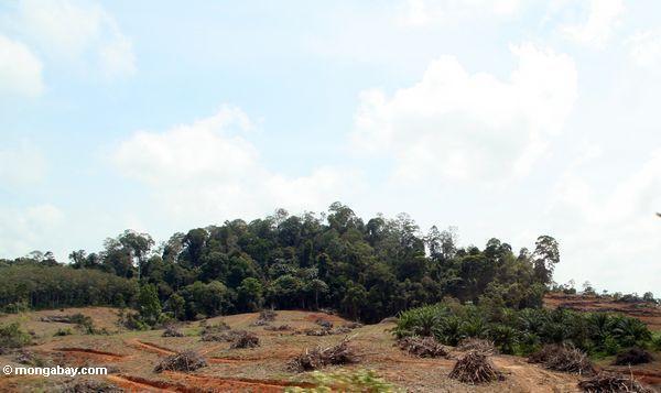 обезлесения в Малайзии