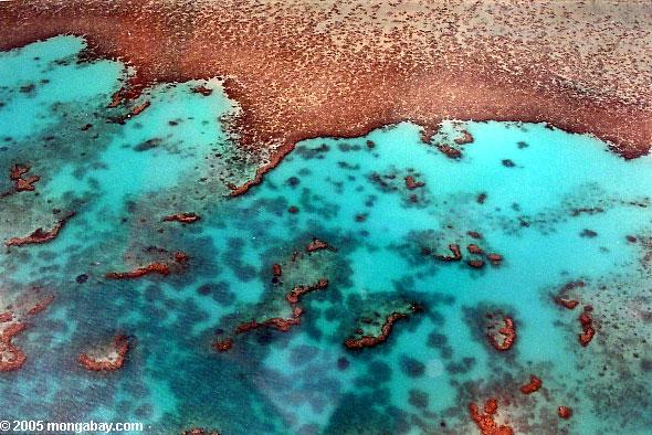 Aerial view of the Great Barrier Reef. Photo by: Rhett A. Butler.