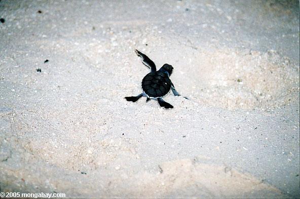 детское морских черепах