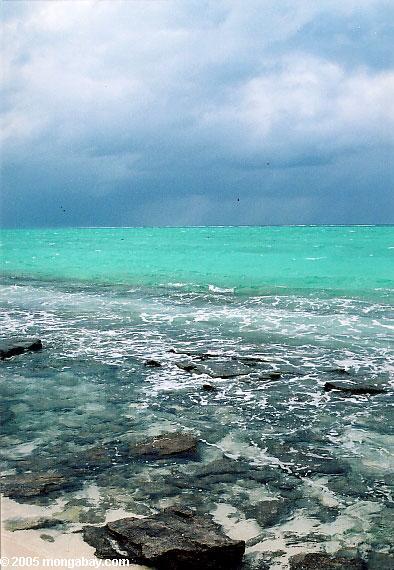 цапля острове пляж