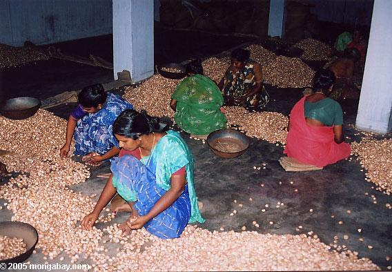 Beetel nuts