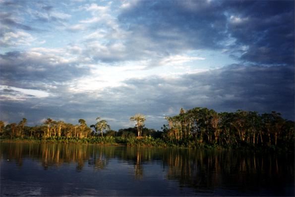 Amazon Orman�ndan Resimler