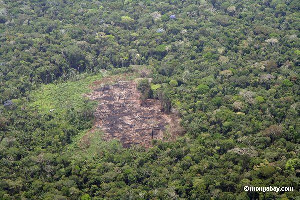 Forest clearing in the Amazon.