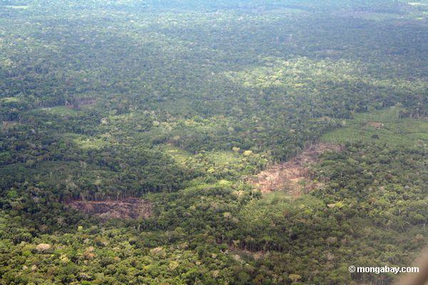 накладные расходы ввиду обезлесения в бассейне реки Амазонки
