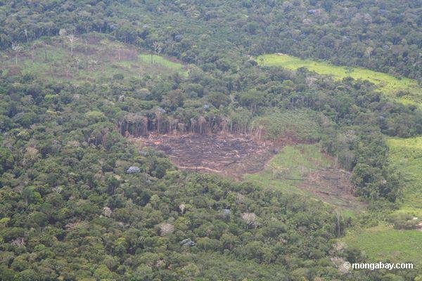 Vista aérea de o mais rainforest cancelado para a agricultura