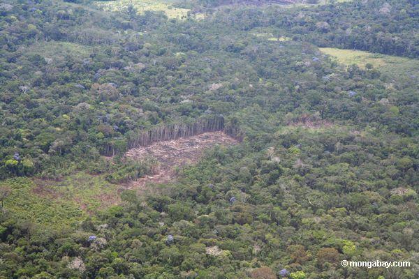folgen des tropischen regenwald