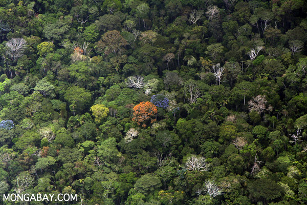 Blooming rainforest in southeastern Peru. Photo by Rhett A. Butler.
