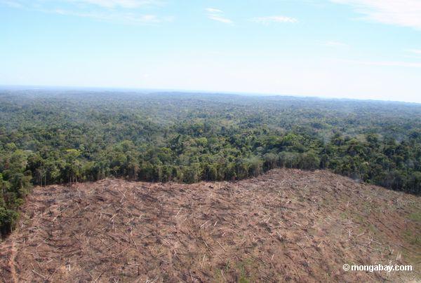 Amazon обезлесения