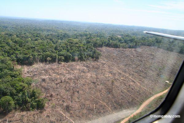 Amazon deforestation in Peru