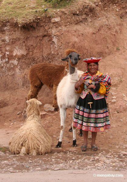 Женщина с ламы, овцы, альпаки