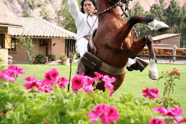 Peruanischer Cowboy