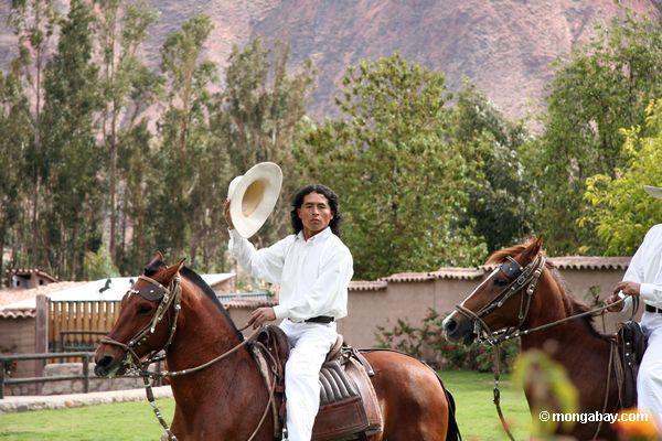 Vaqueiros em cavalos dançando nos Andes Peruvian