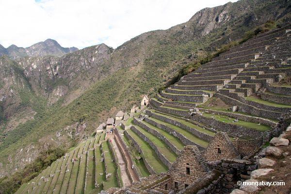 Terraces em Machu Picchu