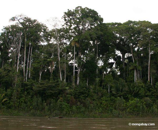 Perfil da floresta de chuva