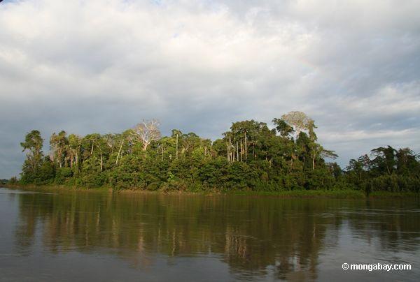 островных лесов от Рио-де-Жанейро Тамбопата