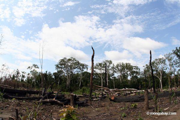 Slash-and-burn agriculture in the Amazon rain forest of Peru [manu-Manu_1024_2893]