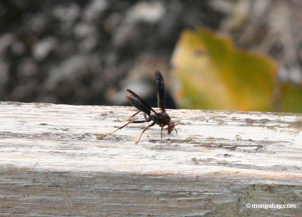 Vespa preta na plataforma do dossel