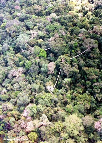 Vista do avião do ACEER (D. Soderquist)