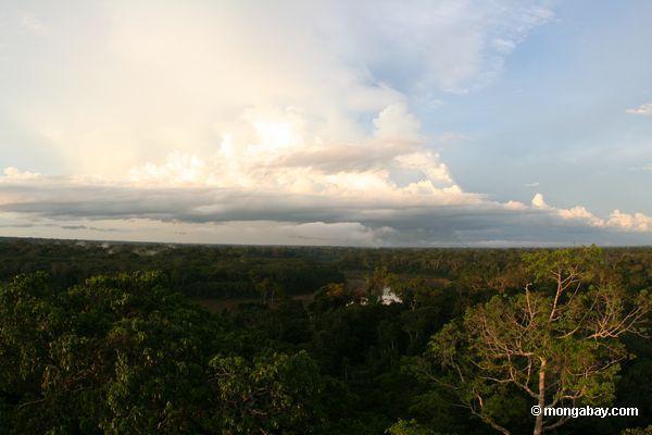 Вечером в дождевых лесов Амазонки с Тамбопата река в фоновом режиме