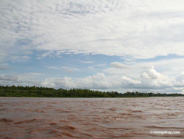 Vegetação do console ao longo do rio de Tambopata