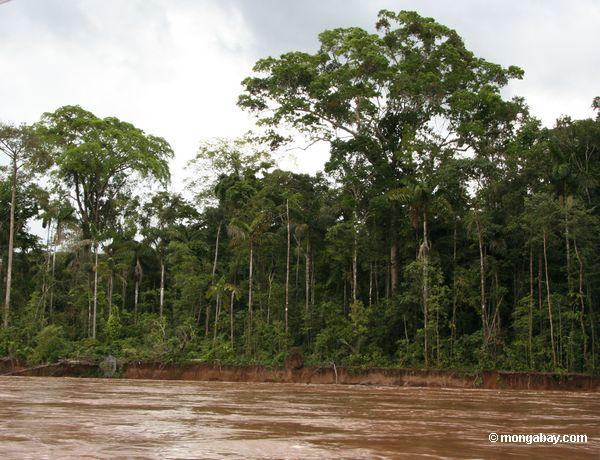 The Amazon forest along the Tambopata River in Peru. Photo by: Rhett A. Butler.