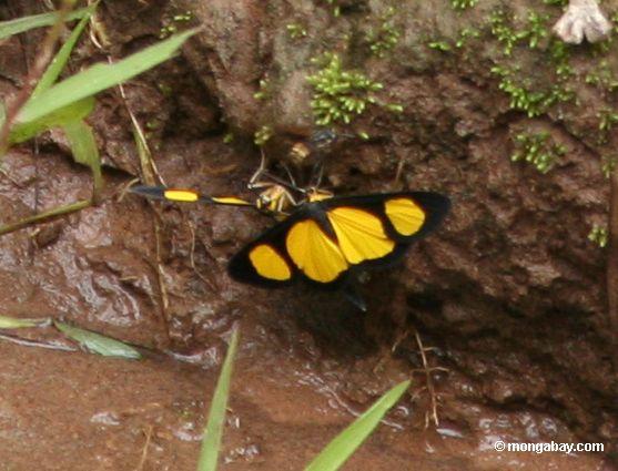 черные и желтые бабочки на реке края