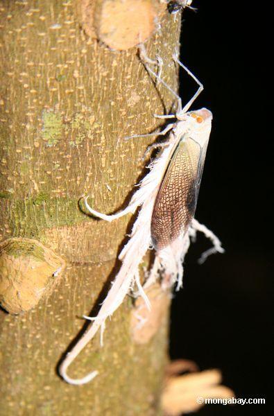 неизвестного насекомого