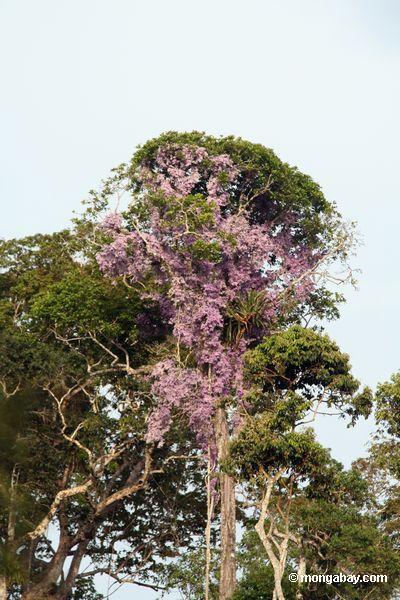 лозы с фиолетового цвета растет купол дерево